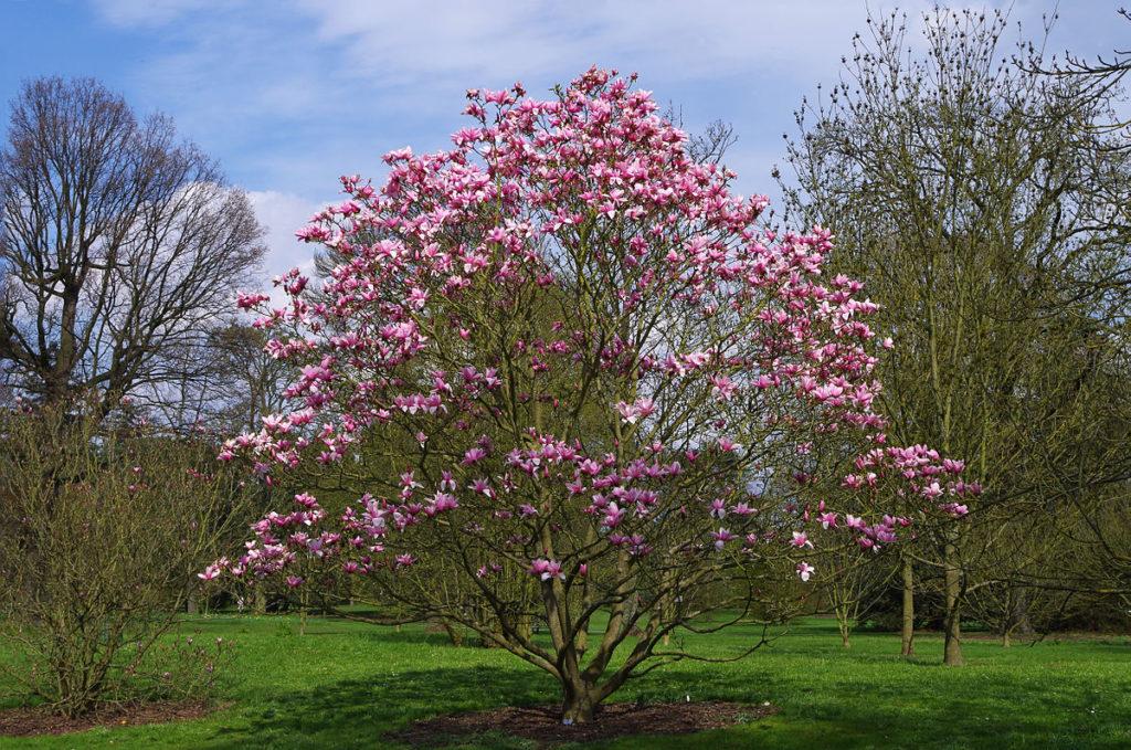 Wyjątkowe drzewo, czyli soliter